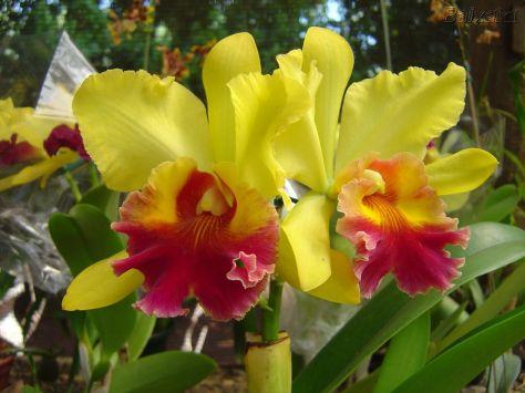 Orquídeas Atocha