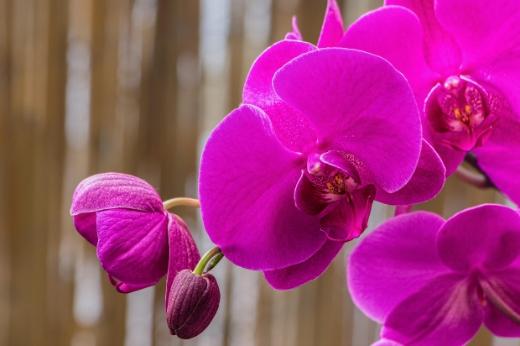 taller-orquideas-parque-oeste-madrid
